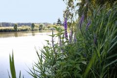 Rybník v Bělušicích